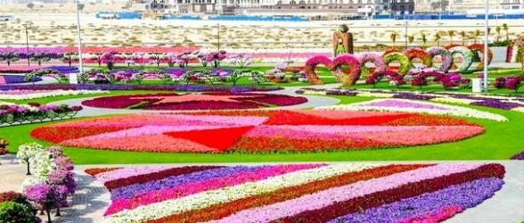 الإمارات العربية المتحدة تفتتح أكبر حديقة للأزهار في العالم.