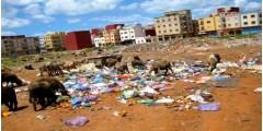 أحياء مدينة العرائش تتحول إلى حاويات الأزبال ومرعى للأغنام والمعز