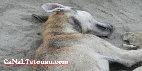 كلب مسعور يعض سبعة أشخاص من بينهم طفلة صغيرة بكورنيش مرتيل ويخلق حالة من الرعب !