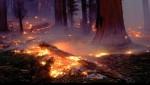 ألسنة اللهب تلتهم غابة تزروت التابعة لجماعة أزلا بتطوان