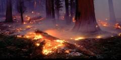 إخماد حريق شفشاون بنسبة 95 بالمائة بعد 9 أيام على إندلاعه .. و هذه حصيلته