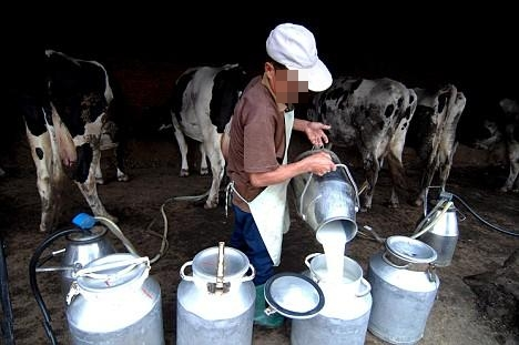 جهة طنجة ـ تطوان تنتج 300 مليون لتر من حليب الأبقار والمعز