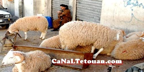 تطوان كلها سوق الكرنة… !!!