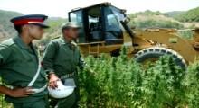 """من جديد .. الحكومة تؤجل المصادقة على مشروع تقنين زراعة """"الكيف"""""""
