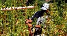 تفكيك عصابة تزرع وتنتج وتروج «الحشيش»  بشمال المغرب