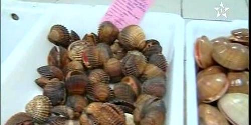 تحذير: وزارة الصيد تحذر المستهليكن من تناول صدفيات سامة بشواطئ تطوان