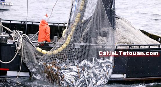 لقاء يبحث تراجع مردودية قطاع الصيد البحري بسواحل شمال المغرب