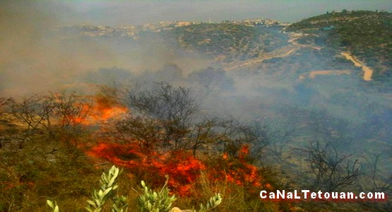حريق هائل يجتاح غابات شفشاون