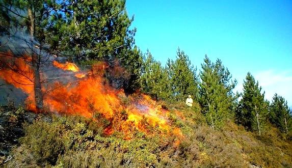 إخماد حريق غابوي بإقليم شفشاون