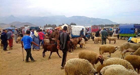 الترخيص لافتتاح سوق أسبوعي لبيع الأبقار و المواشي و الدواجن بضواحي تطوان
