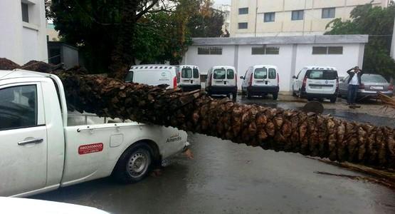 سقوط الاشجار نتيجة الرياح القوية التي عرفتها مدينة تطوان (صور)