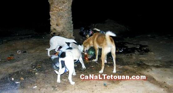 انتشار الكلاب الضالة … خطر حقيقي بات يهدد ساكنة الجبهة