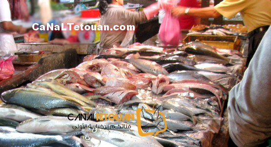 ارتفاع مهول لأسعار السمك في تطوان ! (شاهد)