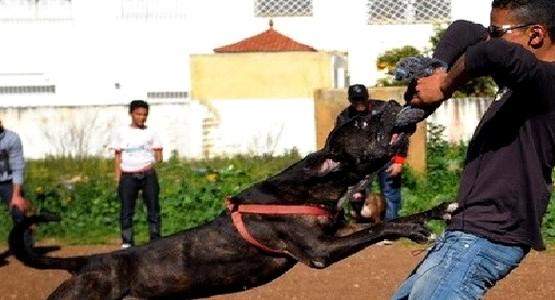 """شابان يستخدمان كلب """"بيتبول"""" و""""سيوف"""" لمهاجمة المواطنين بالعرائش"""