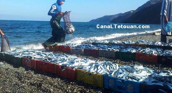 بحارة شاطئ قاع أسراس يصطادون كمية هامة من سمك السردين (صور)