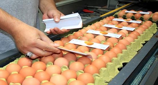 إسبانيا تصدر البيض نحو المغرب