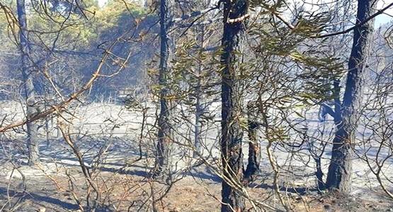 الوقاية المدنية تسيطر على حريق غابات طنجة و هذه هي الحصيلة النهائية