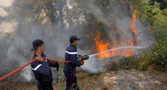 """""""جهة طنجة تطوان """" تحتل المرتبة الثانية في عدد حرائق الغابات المسجلة على الصعيد الوطني"""