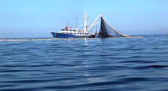 """تحكم """"لوبيات"""" يتحكمون في تهريب سمك """"التونة"""" من موانئ الشمال"""