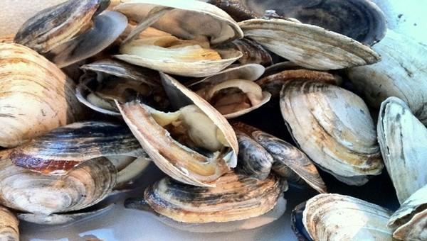 قطاع الصيد البحري يرفع الحظر عن جمع وتسويق الصدفيات بمنطقة كابو نيغرو-مارتيل