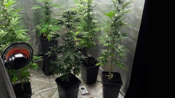 مشتل لزراعة المخدرات داخل شقة بطنجة يقود فرنسيين للقضاء