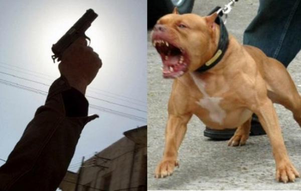 شرطيان بالعرائش يستخدمان الرصاص للسيطرة على جانح حرض عليهما كلبين شرسين