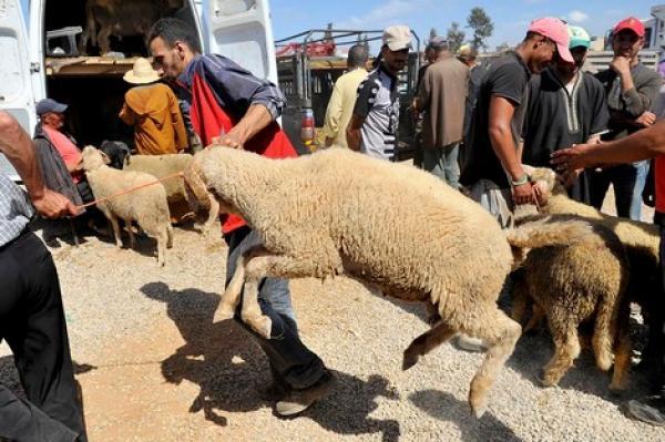 عيد الأضحى .. طقوس دينية متجذرة ومهن موسمية