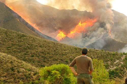 اعتقال شخص تسبب في اشعال حريق غابوي بغابة بوهاشم بشفشاون