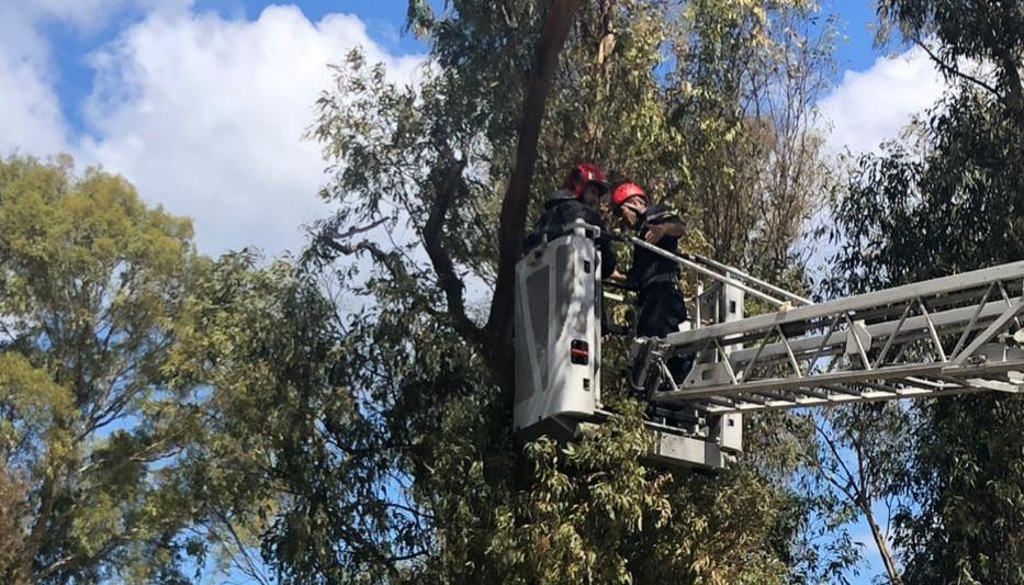 بالفيديو … إحباط محاولة انتحار شاب من أعلى شجرة بطنجة