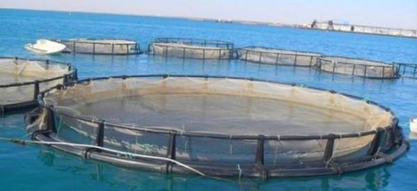 """تربية الأحياء البحرية.. """"أكوا مضيق"""" مشروع رائد بجهة طنجة تطوان الحسيمة"""