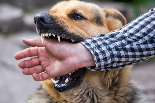 كلب مسعور بالحسيمة يصيب 8 أشخاص ويرسلهم إلى المستعجلات