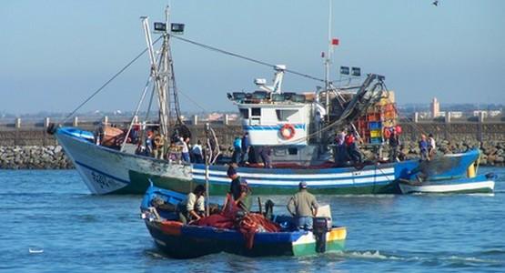 قرار وزاري يمنع صيد الرخويات والثدييات البحرية بمرتيل و أكادير
