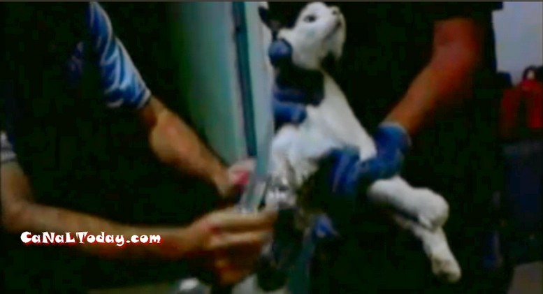 وأخيرا تــم القبض على القط الذي يساعد السجناء على الهروب في البرازيل +فيديو