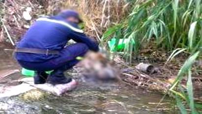 العثور على جثة متحللة لرضيع بغابة الصنوبر بعين بني مطهر