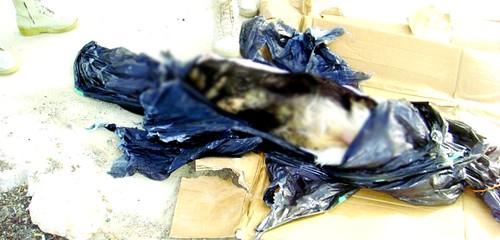 أبلغوا شرطة أكادير بوجود جثة شاب فوجدوا جثة كلب