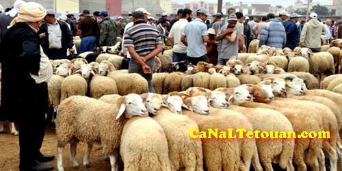 """السلطات تمنع دخول شاحنات الأكباش إلى سوق """"الكورنة"""" مدخل تطوان"""
