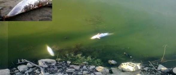 قسم البيئة يقدر تقرير عن نفوق أسماك وادي مرتيل