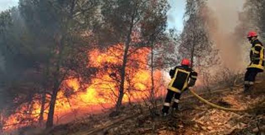 حريق بغابة زمزم ضواحي المضيق يتلف مساحة غابوية هامة